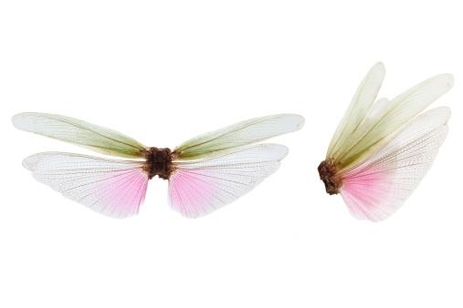 Animal Wing「wings」:スマホ壁紙(18)