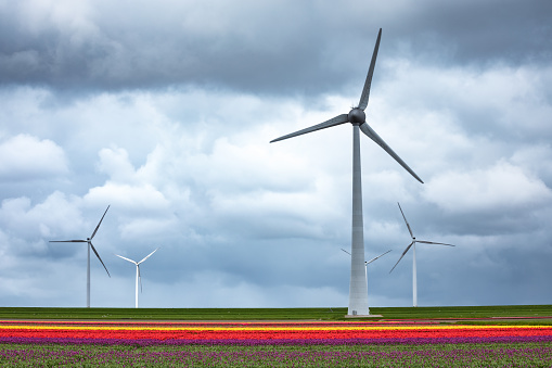 Wind Turbine「Tulip Field With Wind Turbines」:スマホ壁紙(12)
