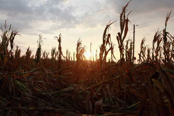 Land「Severe Drought Threatens Midwest Corn Crops」:写真・画像(7)[壁紙.com]