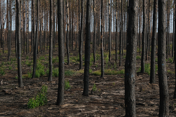 Environmental Damage「Prolonged Dry Weather Hampers Reforestation Following Forest Fire One Year On」:写真・画像(3)[壁紙.com]