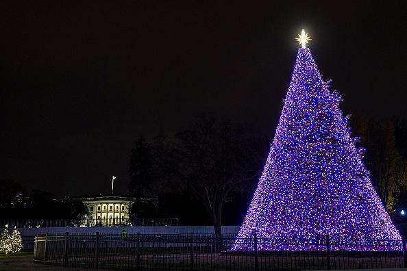 Tree「National Christmas Tree Illuminated For Holiday Season」:写真・画像(7)[壁紙.com]