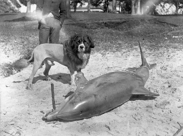 レクレーション活動「Beached Dolphin」:写真・画像(17)[壁紙.com]