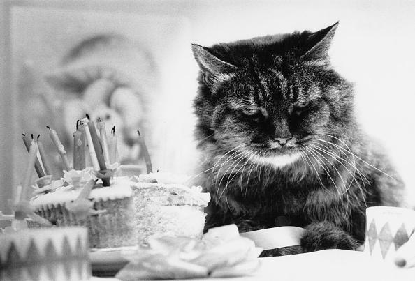 Animal「Grumpy Birthday」:写真・画像(18)[壁紙.com]