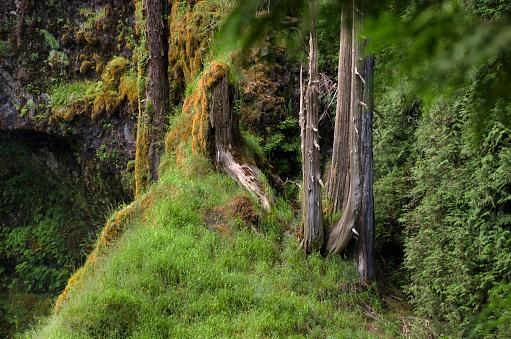 ウィラメット国有林「Willamette National Forest, Oregon」:スマホ壁紙(13)