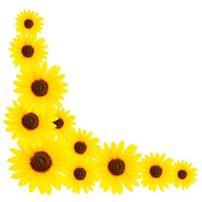ひまわり「Sunflower Corner Border」:スマホ壁紙(18)
