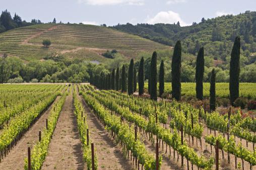 Ferrari「Ferrari Carano Vineyard and Winery near Healdsburg, Sonoma County, northern California, USA」:スマホ壁紙(1)