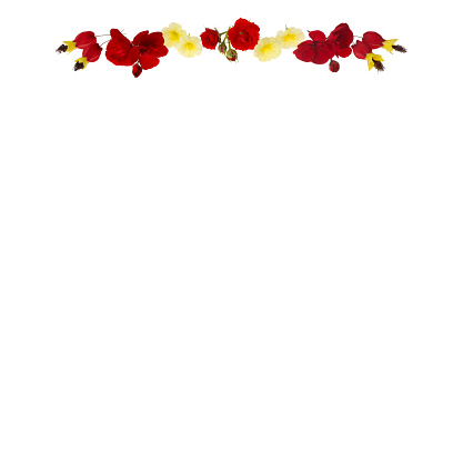 Flowering Maple「Design with yellow & red flowers at top of white copy space.」:スマホ壁紙(12)