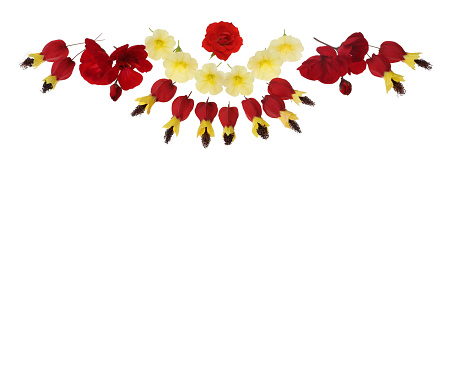 Flowering Maple「Design with red and yellow flowers at top of white copy space.」:スマホ壁紙(13)
