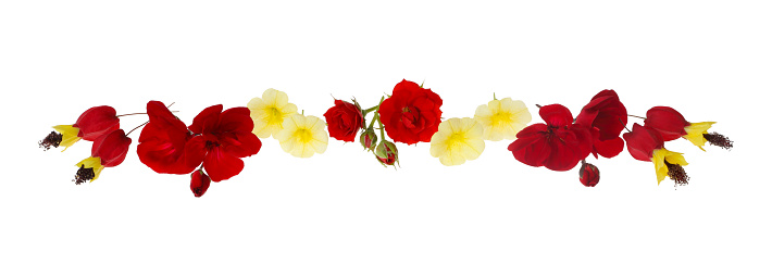 Flowering Maple「Design with red and yellow flowers as frieze on white.」:スマホ壁紙(10)