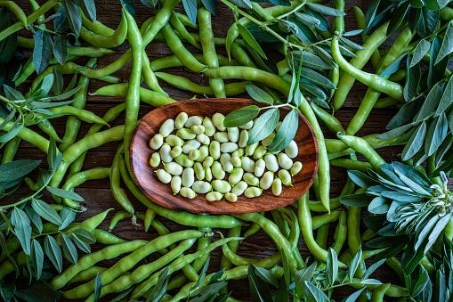 Harvesting「Broad beans lima beans fresh just after harvest」:スマホ壁紙(5)