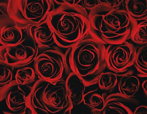 Love - Emotion「Red roses, close-up」:スマホ壁紙(7)