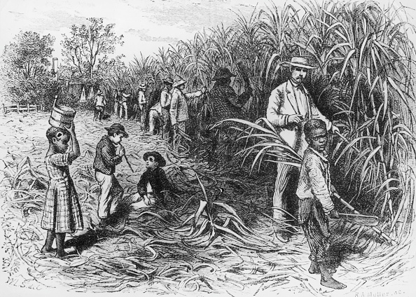 Slavery「Sugar Harvest」:写真・画像(19)[壁紙.com]