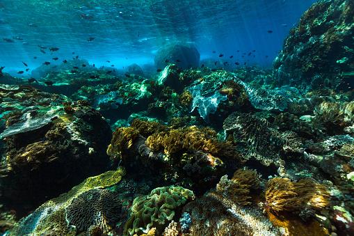 Shallow「High Noon, Sharp Light on Shallow Coral Reef, Pura Island, Indonesia」:スマホ壁紙(5)
