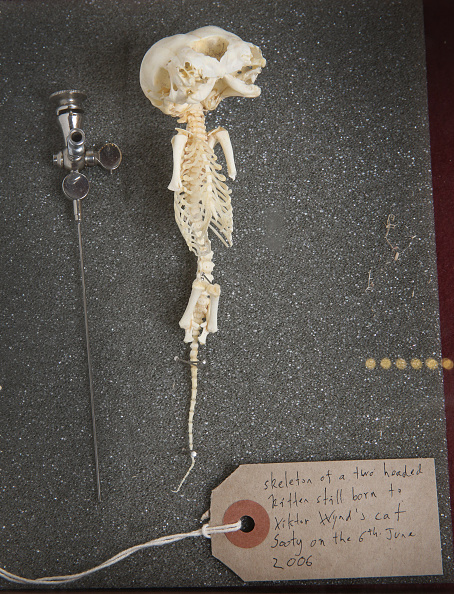 Kitten「The Viktor Wynd Museum of Curiosities Houses A Collection Of Weird And Wonderful Artefacts」:写真・画像(19)[壁紙.com]