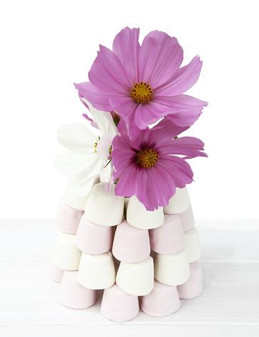 コスモス「Cosmos flowers and marshmallows on white.」:スマホ壁紙(6)