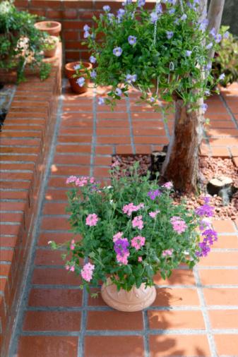 コスモス「Cosmos flowers in a pot on a brick patio」:スマホ壁紙(3)