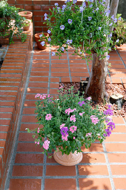 Cosmos flowers in a pot on a brick patio:スマホ壁紙(壁紙.com)