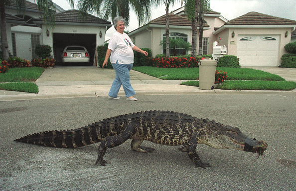 Irritation「Florida Alligators」:写真・画像(5)[壁紙.com]