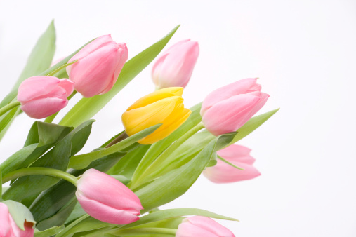 Mother's Day「Tulip Bouquet in pink and yellow」:スマホ壁紙(11)