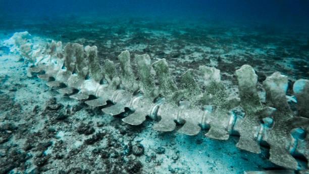 珍しいクジラの骨格を水中:スマホ壁紙(壁紙.com)