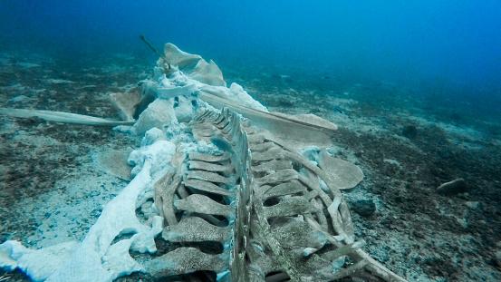 Whale「Rare Whale Skeleton Underwater」:スマホ壁紙(16)
