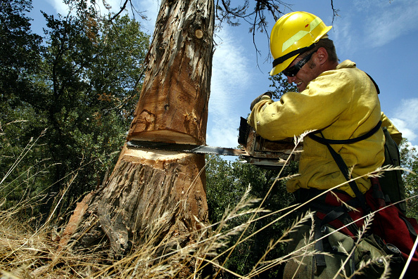 Lumber Industry「Beetles Bring Devastation And Extreme Fire Danger to Southern California Forests」:写真・画像(0)[壁紙.com]