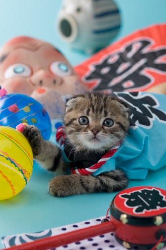 Hyottoko「Scottish Fold Kitten and Summer Festival」:スマホ壁紙(15)