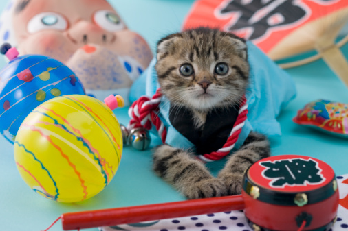 Hyottoko「Scottish Fold Kitten and Summer Festival」:スマホ壁紙(7)