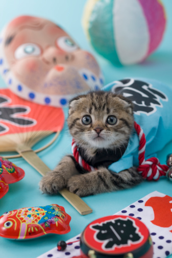 Hyottoko「Scottish Fold Kitten and Summer Festival」:スマホ壁紙(6)