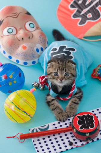 Hyottoko「Scottish Fold Kitten and Summer Festival」:スマホ壁紙(8)