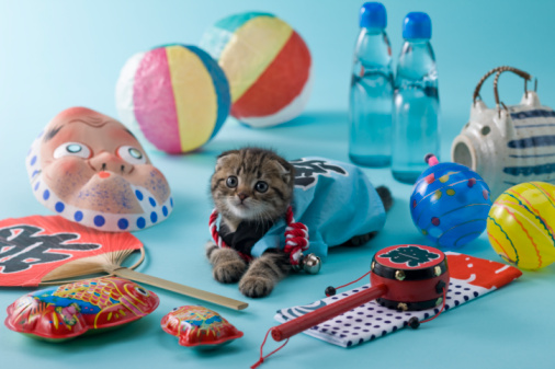 Hyottoko「Scottish Fold Kitten and Summer Festival」:スマホ壁紙(12)