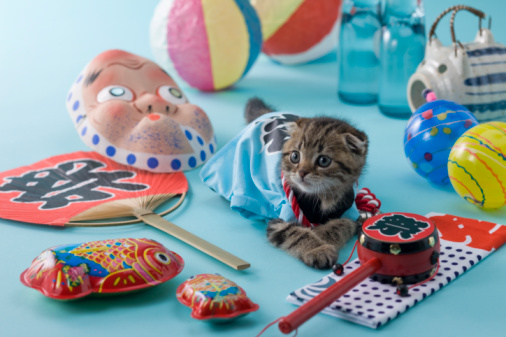 Hyottoko「Scottish Fold Kitten and Summer Festival」:スマホ壁紙(14)