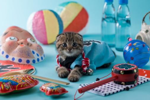 Hyottoko「Scottish Fold Kitten and Summer Festival」:スマホ壁紙(13)