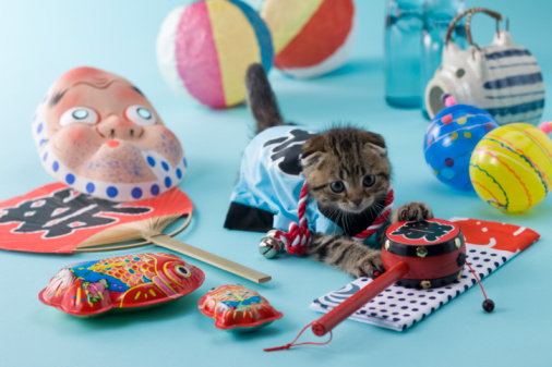 Hyottoko「Scottish Fold Kitten and Summer Festival」:スマホ壁紙(9)