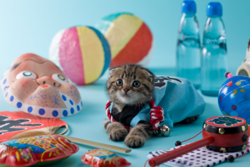 Hyottoko「Scottish Fold Kitten and Summer Festival」:スマホ壁紙(15)