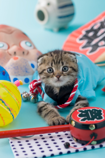 Hyottoko「Scottish Fold Kitten and Summer Festival」:スマホ壁紙(16)
