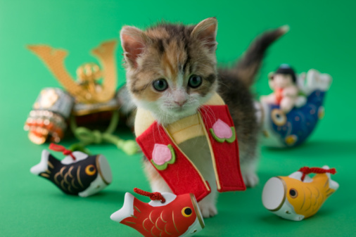 こどもの日「Scottish Fold Kitten and Children's Day Celebration」:スマホ壁紙(13)