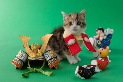 こどもの日「Scottish Fold Kitten and Children's Day Celebration」:スマホ壁紙(6)