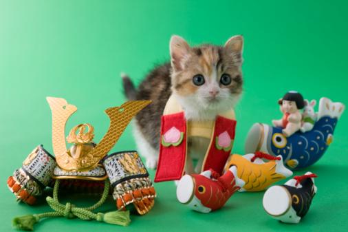 こどもの日「Scottish Fold Kitten and Children's Day Celebration」:スマホ壁紙(8)