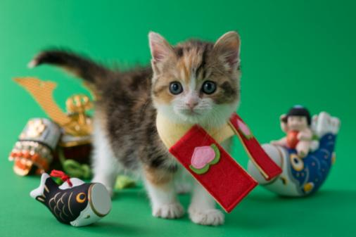 こどもの日「Scottish Fold Kitten and Children's Day Celebration」:スマホ壁紙(3)