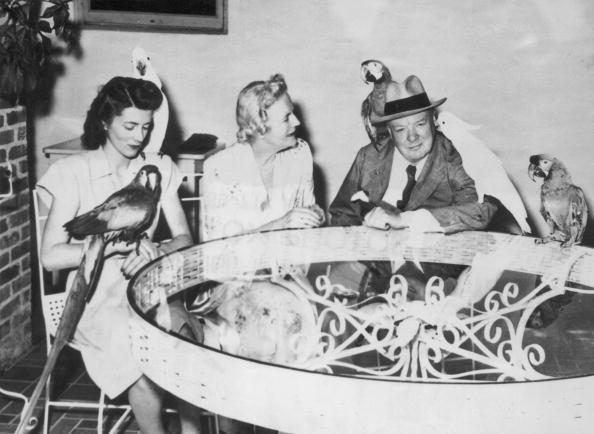Table「Winston Churchill Surrounded By Exotic Birds」:写真・画像(15)[壁紙.com]