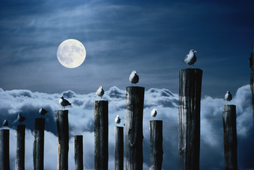 Multiple Exposure「Seagulls perched on wooden posts under a full moon.」:スマホ壁紙(1)