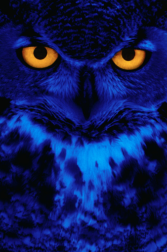 Animal Eye「Owl with Yellow Eyes」:スマホ壁紙(6)