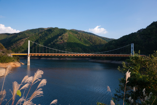Japanese pampas grass「Lake Kuzuryu and Dream Bridge, Ono, Fukui, Japan」:スマホ壁紙(9)