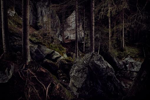 Horror「Dramatic lighting in forest」:スマホ壁紙(12)
