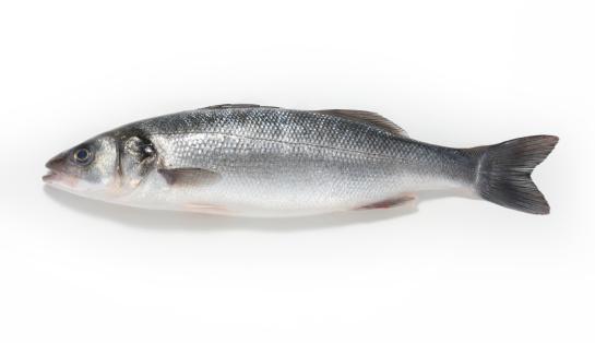 質感「Sea bass on a white background」:スマホ壁紙(1)