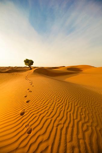 Single Tree「desert footprints」:スマホ壁紙(10)
