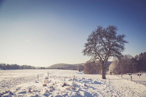 雪景色「Germany, Kaiserslautern district, Palatinate Forest, winter landscape near Trippstadt」:スマホ壁紙(3)