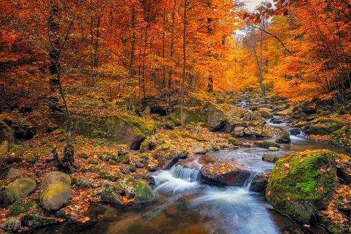 秋「秋の霧の森の中の小川 - 国立公園ハルツ」:スマホ壁紙(12)