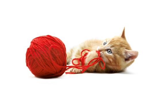 子猫「キトンが」:スマホ壁紙(2)